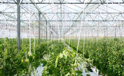SERCOM automates modern greenhouse in Vietnam