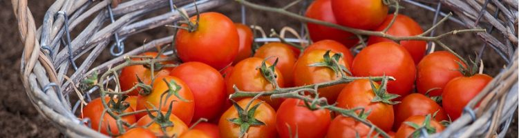 [inglés] Asia: Consistent production for Thai growers