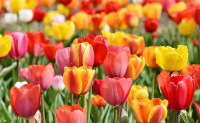 Oud-winnaars Tuinbouw Ondernemersprijs bij JUB